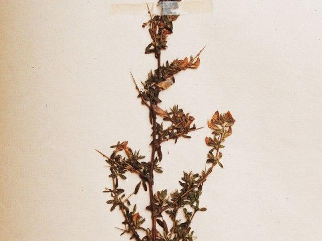 botanika 1