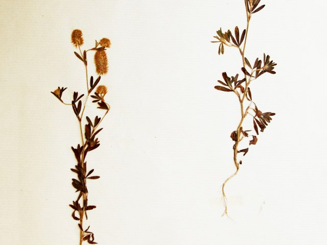 Botanika 2