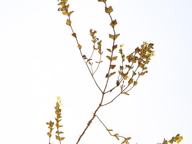 kvetiny 7