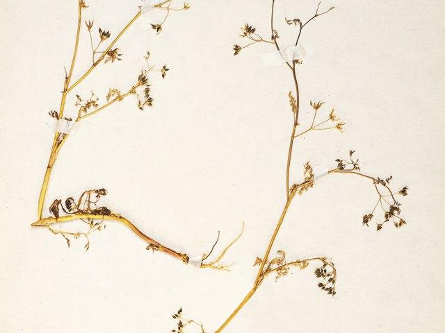 kvetiny 8