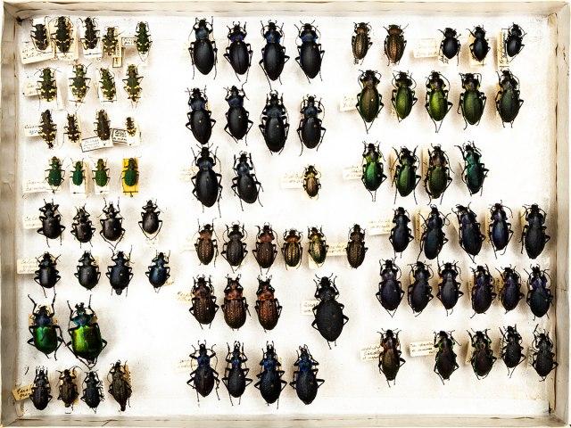 entomologie 1