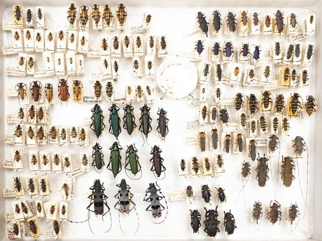 entomologie 2