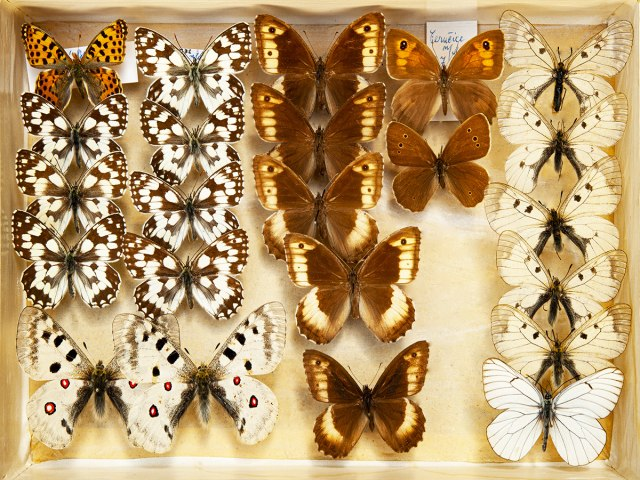 entomologie 3