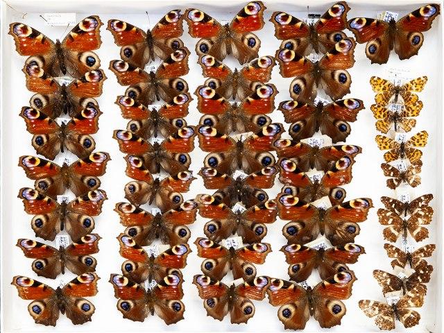 entomologie 4