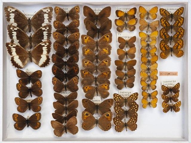 entomologie 5