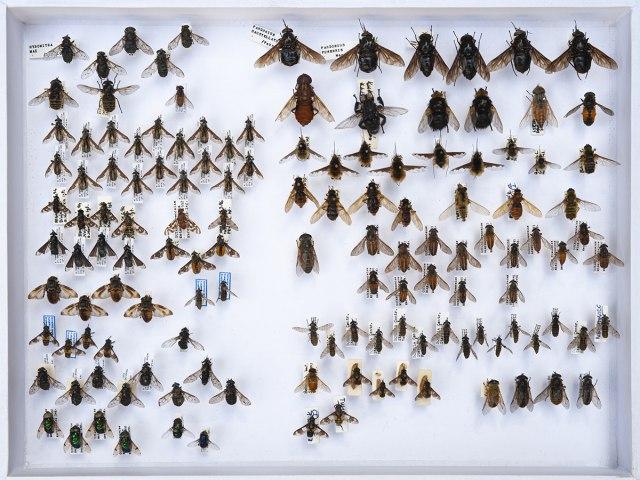 entomologie 6